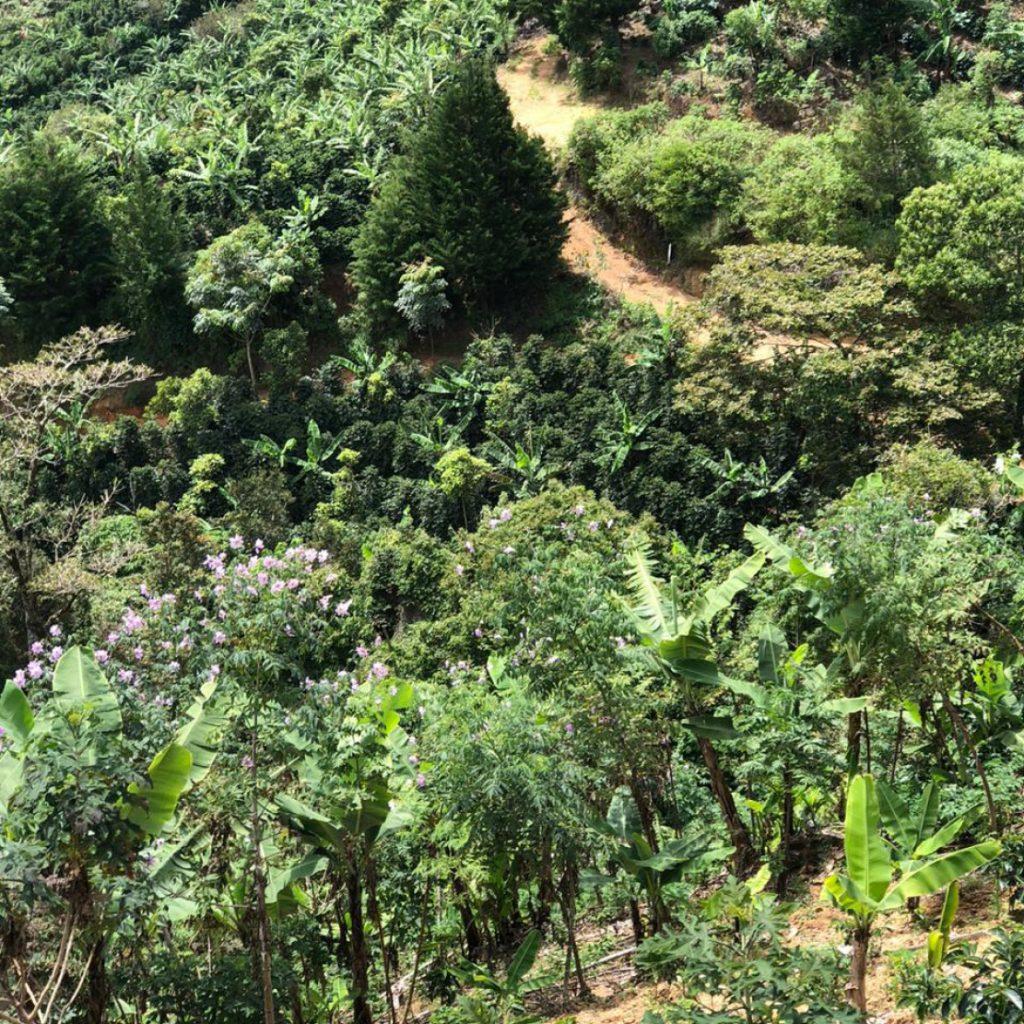 Green coffee bean  Green Coffee bean supplier  Green coffee bean wholesaler  Green coffee bean distributor  Coffee supplier  South American Coffee supplier  Coffee trader
